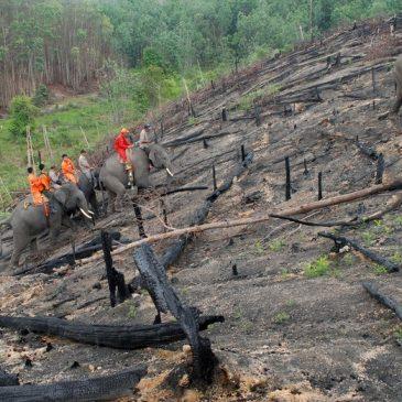 Benang Merah antara Hutan dan Perubahan Iklim